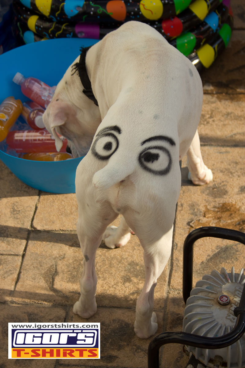 Igor 39 s t shirts airbrush embroidery and iron on photo for Custom dog face t shirt